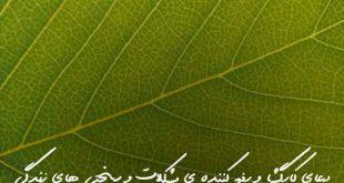 278362376732963760-310x165 ادعيه و اذكار دعا و ختم مجرب
