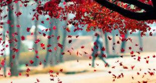 926DFA3D-0F82-4CD1-9558-C71267B5022F-310x165 ادعيه و اذكار دستورالعمل و نسخه مجرب دعا دعا و ختم مجرب دعای حاجت روایی دعای رفع بلا دعای رفع غم و ناراحتی دعای رفع مشکلات و گرفتاری