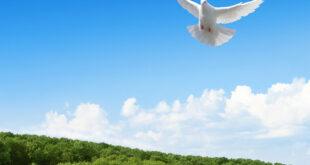 تعبیر-خواب-کبوتر-و-خوردن-گوشت-کبوتر-تعبیر-دیدن-کبوتر-سفید-در-خواب-310x165 تعبیر خواب