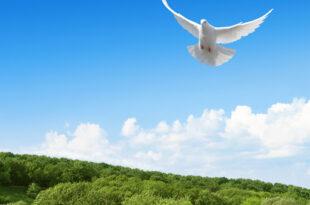 تعبیر-خواب-کبوتر-و-خوردن-گوشت-کبوتر-تعبیر-دیدن-کبوتر-سفید-در-خواب-310x205 تعبیر خواب