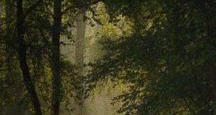 دعای-دفع-شر-و-بلا-و-خطرات-310x165 دعا و ختم مجرب دعای رفع بلا