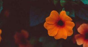دعای-تسخیر-معشوق-310x165 مهر و محبت